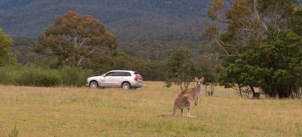 El coche autónomo de Volvo no puede detectar canguros
